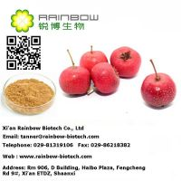 High quality chinese Hawthorn extract/Hawthorn Fruit P.E