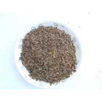 Sun Dried Waterfly