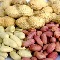Peanut kernels/Blanched peanuts/Peanuts in shell