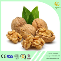 2017 crop hot sales walnut kernel