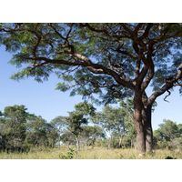 Wood Cants - Kiaat & Teak thumbnail image