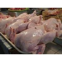 FROZEN WHOLE CHICKEN AVAILABLE FOR EXPORT