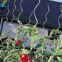 1.8m Length 6mm Diameter Galvanized Tomato Spiral Rod/Tomato Spiral Stick /Tomato for Garden