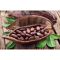 buy cocoa bean and cocoa powder thumbnail image