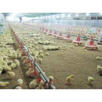 Feeding System for Poultry houses