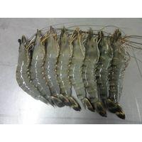 Sell Frozen Shrimp thumbnail image