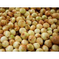 Fresh Quality Yellow onion
