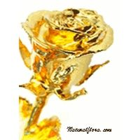 24kt Gold Plated Natural Rose