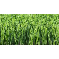 Stemgrass Turf