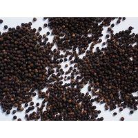 Vietnam and Indonesia Black Pepper Nigrum