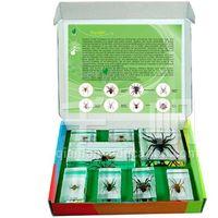 1717 Qianfan Spiders Embedded SpecimenKids Biology Toys for Preschool