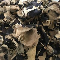 Dried Black FUNGUS Ear Mushroom Ear Wood Auricularia auricula-judae (Jolie Whatsapp 84 983587558