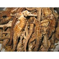 Dried Seahorse, Dried Fish Maw, Dried Seahorse Fish, Dried Sea Cucumber
