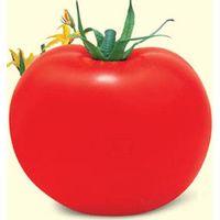 Hybrid vegetable seed/Tomato seed- American Super star