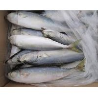 Sell Offer Frozen Pacific Mackerel 50% Discount thumbnail image