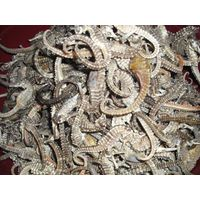 Bulk Dried Seahorse for Medecine