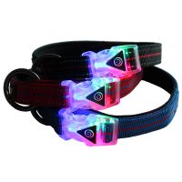 QQPETS factory newest led buckle dog collar