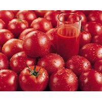 tomato paste with cold break/hot break