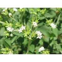 Stevia Leaf P.E. Stevia rebaudiana Bertoni,Stevioside 90%-98% HPLC,Rebaudioside A 40%-98%