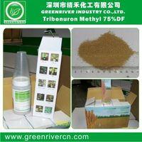 Tribenuron-Methyl 75%WP / WDG / DF
