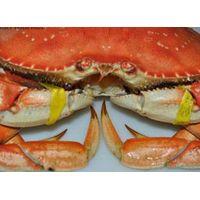 Crabs thumbnail image