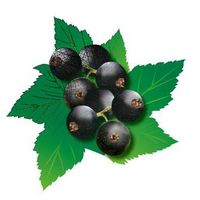 Black Currant P.E.