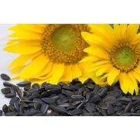 Sunflower Oil & seeds thumbnail image