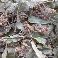 Linden flower and leaves/ Tilia folium thumbnail image