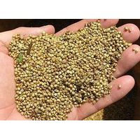 Millet from Russia thumbnail image