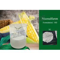 Nicosulfuron 40g/L OD thumbnail image