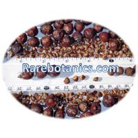 Juniperus Communis Seeds thumbnail image