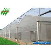 Multi-span Geenhouse for Tomato