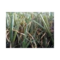 Artificial Grass (ELITE-30)