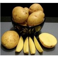 100% Vietnam Origin Fresh Potato New Crop 2015- 2016