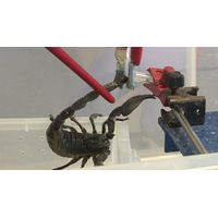 Scorpion venom,venoms for sale
