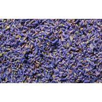lavender bud,lavender spice,herb,dried lavender flower,lavender oil thumbnail image