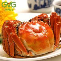 Chinese mitten crab hairy crab