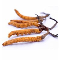 Herbal medicine extract manufacturer supply polysaccharide cordyceps sinensis extract