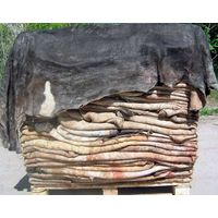 High Quality Dry and Wet Salted Donkey / Goat Skin / Cow skin & Hides thumbnail image