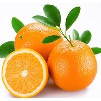 Supply Tangerine Peel Powder Extract