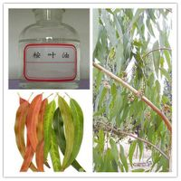 Eucalyptus essential oil thumbnail image