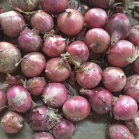High quality lowest price fresh red onion for sale with fast delivery from Chinese factory