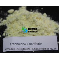 Test E Raw Powder Parabolan Trenbolone Steroids 10161-33-8 Trenbolone Enanthate For Muscle Building