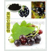 beverage ingredients black currant anthocyanidins 25% thumbnail image