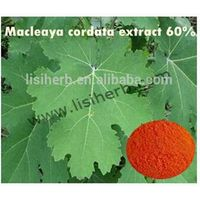 high quality macleaya cordata extract chelidonine / sanguinarine powder