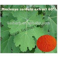 high quality macleaya cordata extract chelidonine / sanguinarine powder