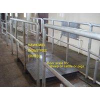 slaughtering equipment for pigs(swine/hog) thumbnail image