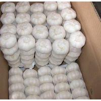 2010 Chinese Fresh Garlic thumbnail image