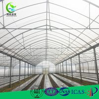 Economic single green house film vegetable greenhouse for tomato