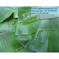 BANANA LEAF FROM VIET NAM thumbnail image